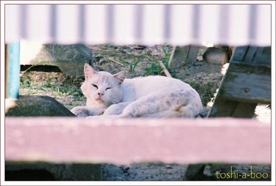 blogfunnycat1.jpg