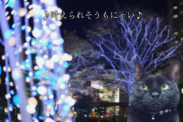 クリスマスイブ2014_7