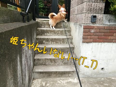 姫ちゃんち1