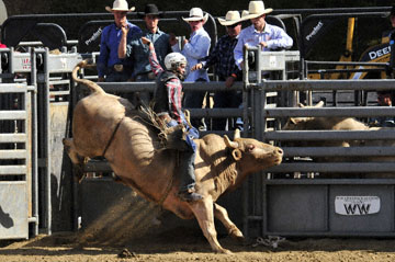 blog 40 Auburn, Bull Riding 9, Brady Williams (NS, Snelling, CA