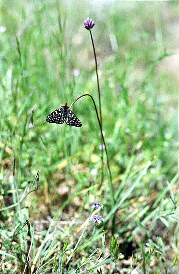 blog Checker Spot P, Joseph D. Grant-5.30.00.jpg