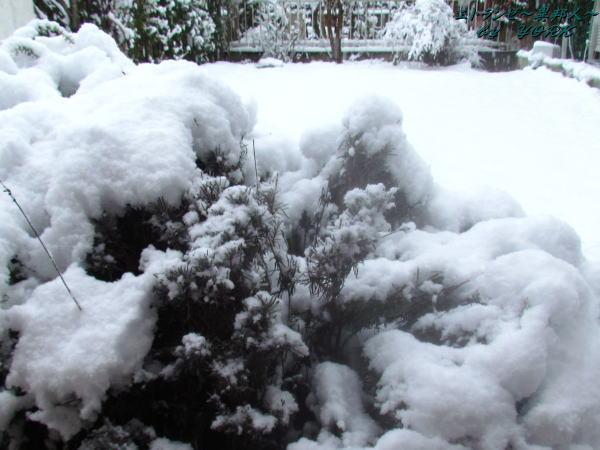1154庭の雪140208