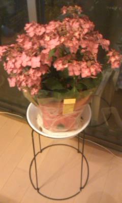 妻からの花束