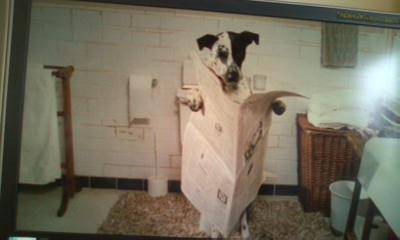 トイレに座って新聞