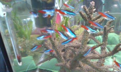 珊瑚と淡水魚