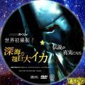 深海の超巨大イカ DVD版