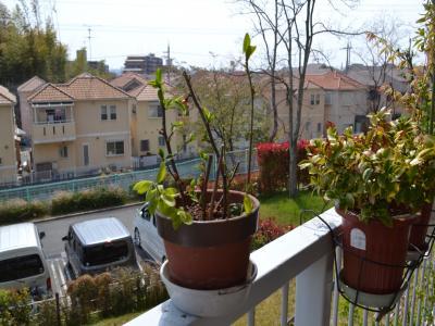 """ボケとエノキを植えた""""挿し木""""用の植木鉢。その後、いろんな樹種が植えられるようになる"""