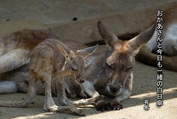 a kanga grt c