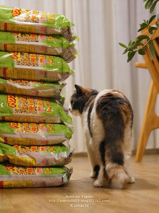 こまちと猫砂