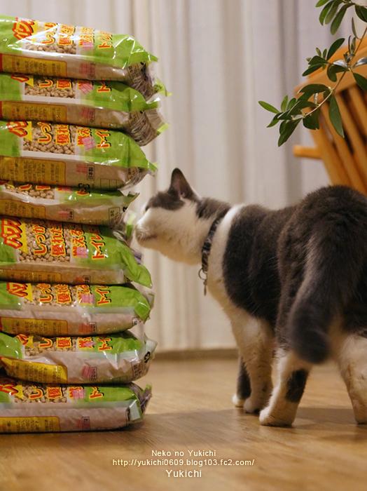 ゆきちと猫砂