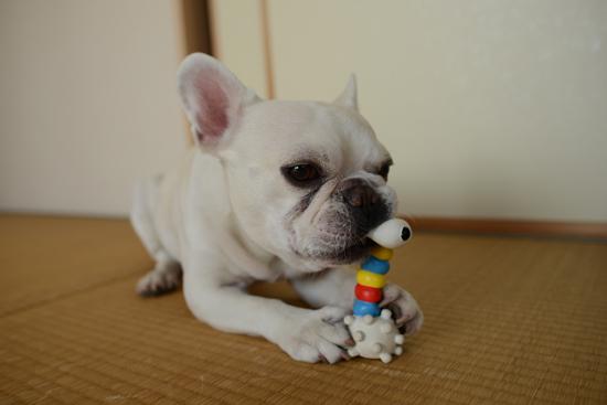すぬーぴーのおもちゃ④