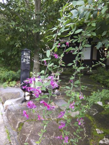 ふじやの萩の花