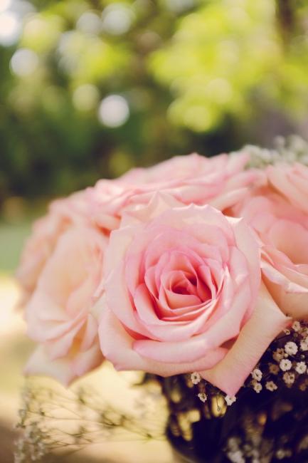 rose002.jpg