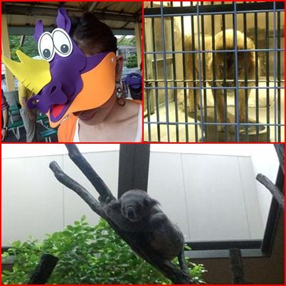 ライオンとコアラ