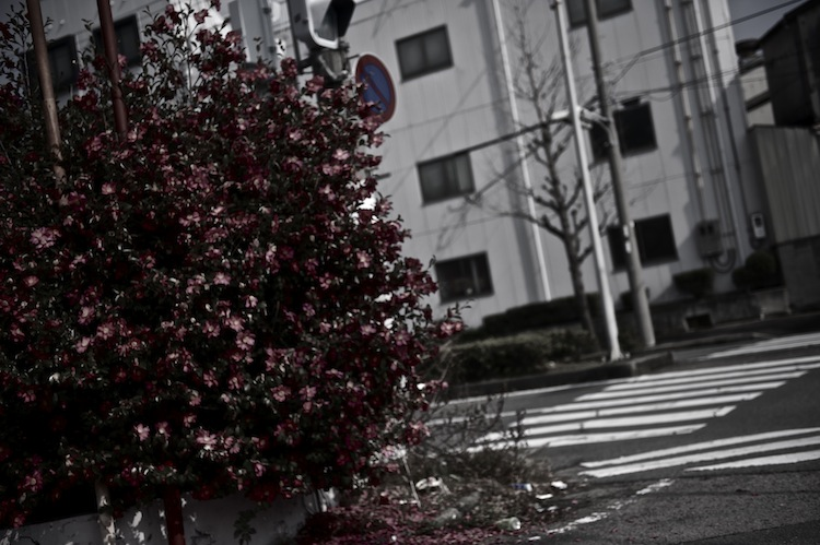 DSC_7758.jpg