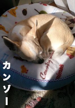 maimai14-kanzo_convert_20140208211020.jpg