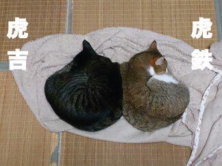 maimai14-kotetsu_convert_20140208211350.jpg