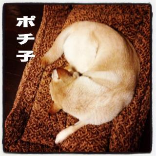 maimai14-pochiko_convert_20140208213507.jpg