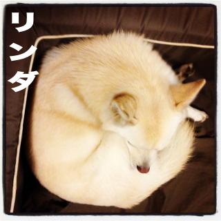 maimai14-rinda_convert_20140208213629.jpg