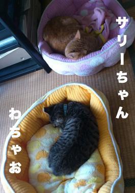 mamai14-sariwachao_convert_20140208213937.jpg