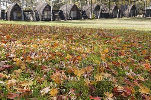 晩秋 キャンプ場の落ち葉