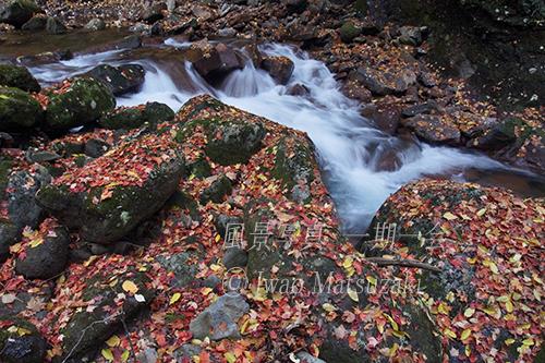 晩秋 渓谷の落ち葉