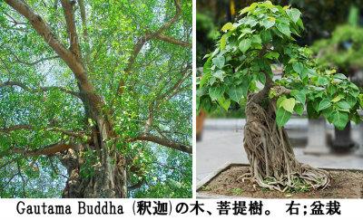 Buddha campaign 03