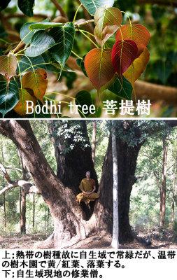 Buddha campaign 04