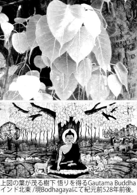 Buddha campaign 01