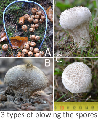 3 types of browing the spores 01