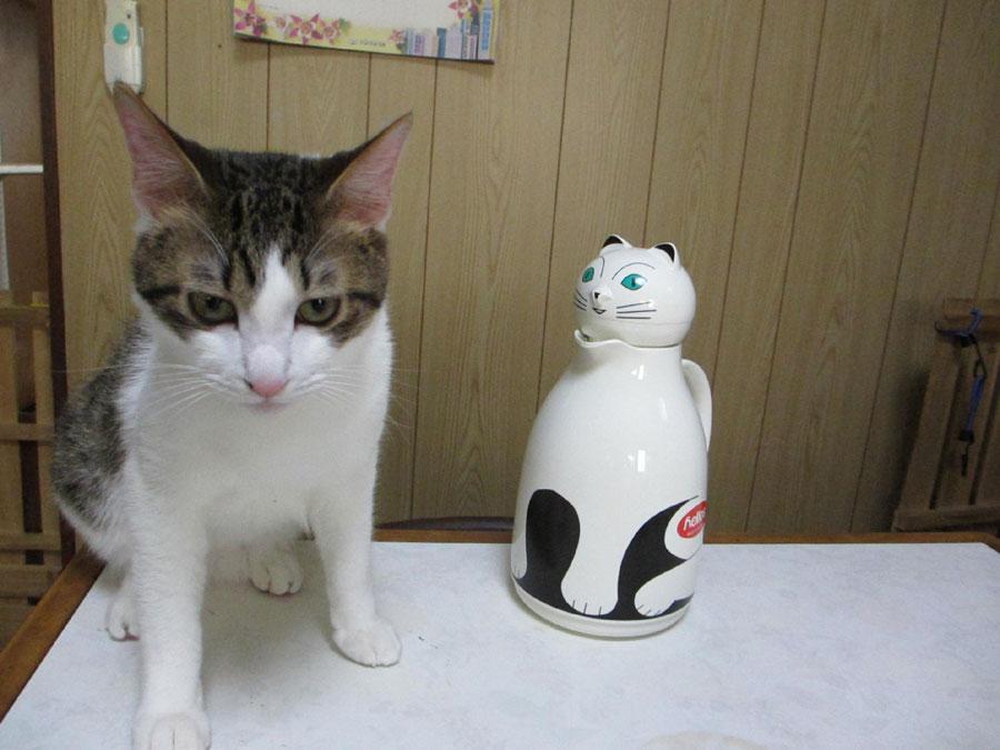 猫魔法瓶2