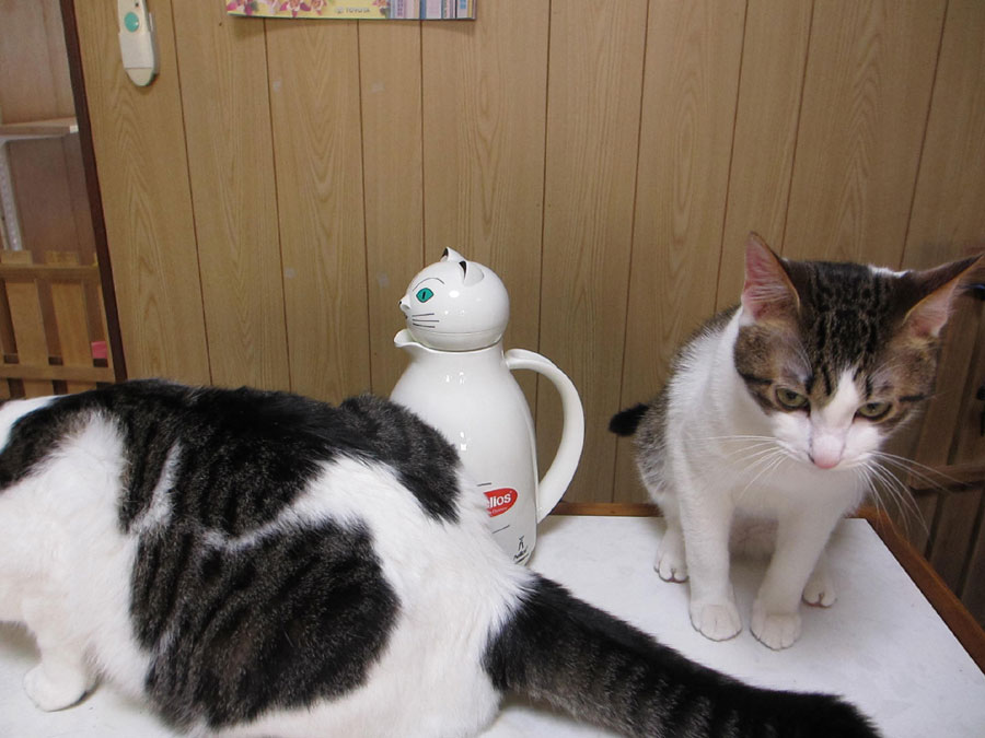 猫魔法瓶1