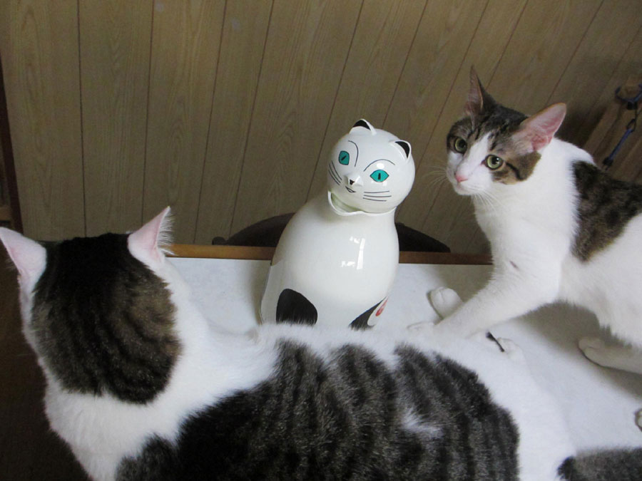 猫魔法瓶3