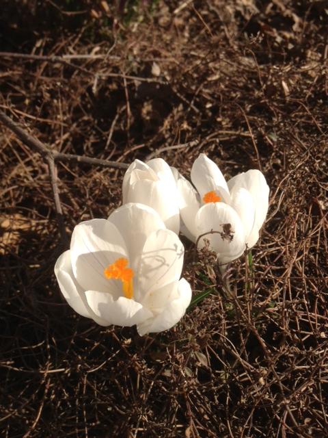 Spring2-17Apr13.jpg