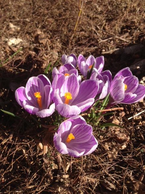 Spring3-17Apr13.jpg