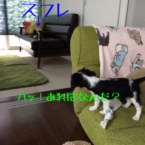 fc2blog_20141018110823cad.jpg