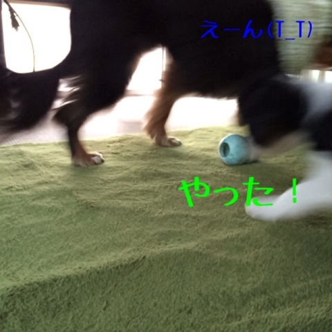 fc2blog_20141018111113b8c.jpg