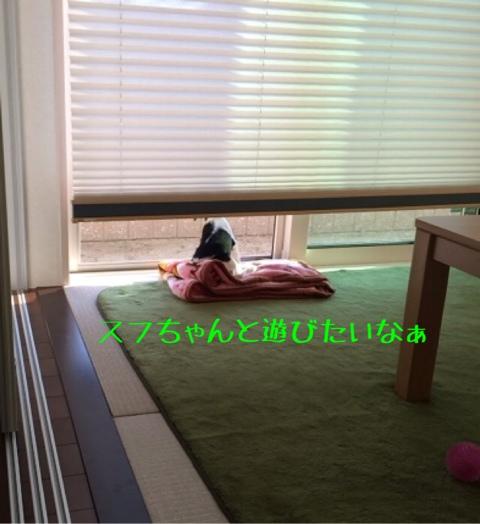 fc2blog_20141020093800e1e.jpg