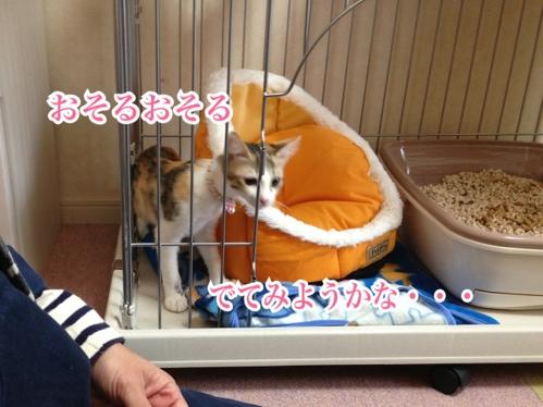 fc2blog_20131125012621a4f.jpg