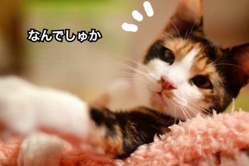 fc2blog_20131126143107a46.jpg