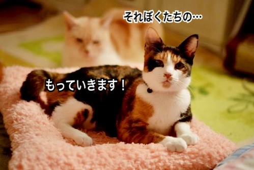 fc2blog_2013112614365075a.jpg