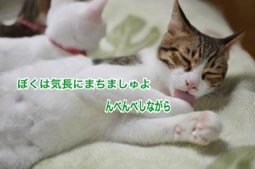 fc2blog_2013112614543883f.jpg