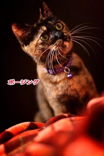 fc2blog_2013112615464318e.jpg