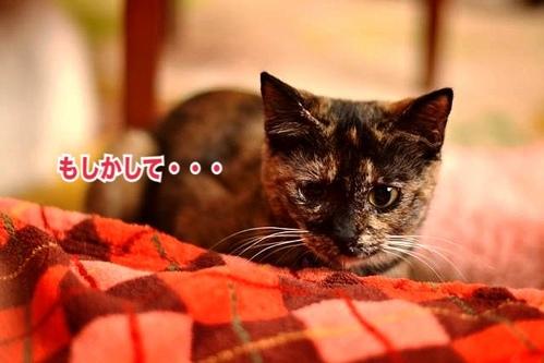 fc2blog_201311261550164e8.jpg