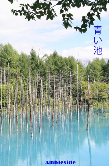IMG_5750青い池