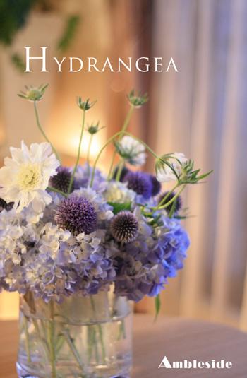 IMG_5102-Hydrangea.jpg