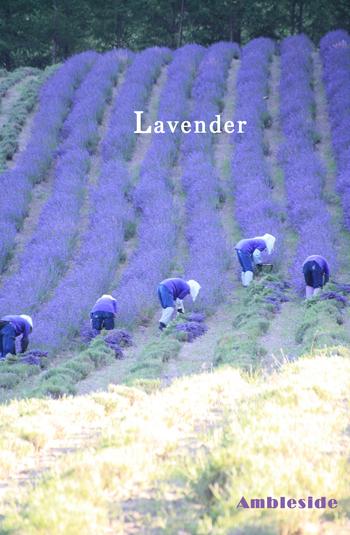 IMG_5764-Lavender.jpg