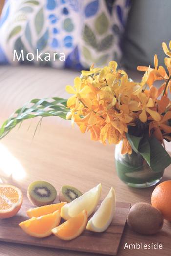 IMG_6440-mokara.jpg