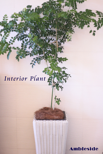 IMG_6442-interior-plant.jpg