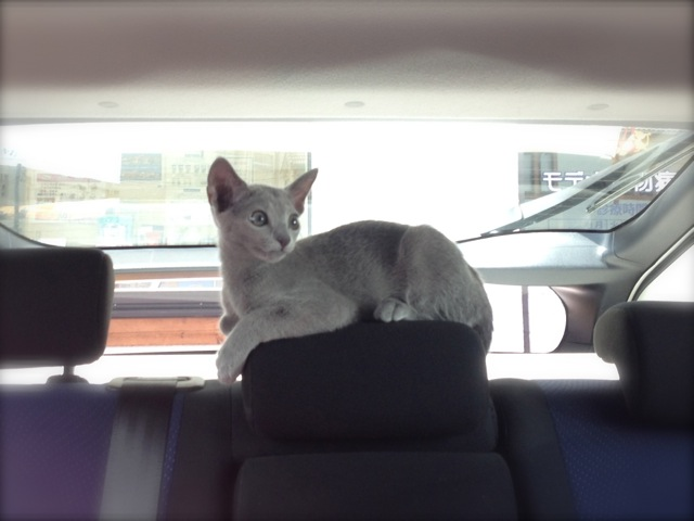 車の中うしろ